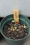 Plant_20080530_01_