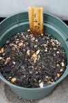 Plant_20080530_02_