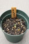 Plant_20080709_01_