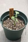 Plant_20080718_03_