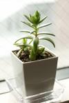 Plant_20080718_04_