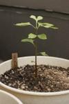 Plant_20080820_03_