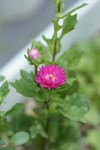 Plant_20080905_01_