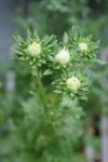 Plant_20080905_02_