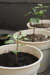Plant_20080909_07_