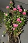 Plant_20080917_01_