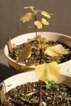 Plant_20081204_01_