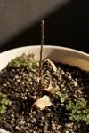 Plant_20081218_03_