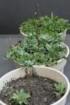 Plant_20090406_04_