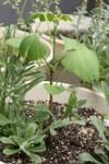 Plant_20090423_01_