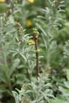Plant_20090423_02_