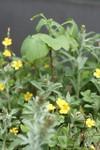Plant_20090423_03_