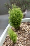 Plant_20090423_04_