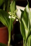 Plant_20090427_02_