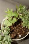 Plant_20090427_03_