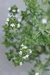 Plant_20090430_01_