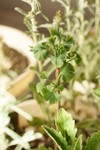 Plant_20090504_03_