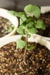 Plant_20090517_02_