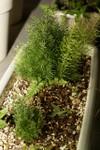 Plant_20090725_01_