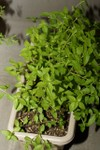 Plant_20090725_02_