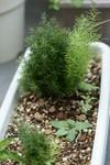 Plant_20090803_02_