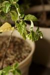 Plant_20090924_02_