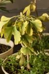 Plant_20091207_001_