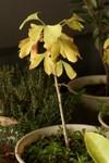 Plant_20091207_003_
