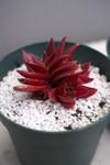 Plant_20100317_005_