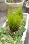 Plant_20100331_003_