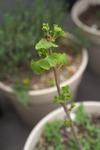 Plant_20100414_004_