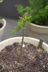 Plant_20100421_004_