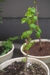 Plant_20100421_006_