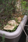Plant_20100421_008_