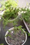 Plant_20100505_006_