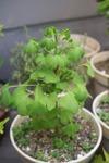 Plant_20100505_008_