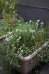Plant_20100527_002_