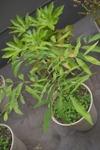 Plant_20100531_003_