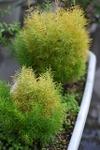 Plant_20101222_001_