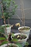 Plant_20101222_002_