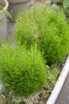 Plant_20110420_004_
