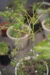 Plant_20110420_005_