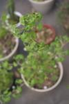 Plant_20110420_007_