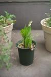 Plant_20110502_002_