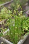 Plant_20110502_008_