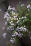 Plant_20110516_003_