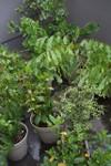 Plant_20110516_004_