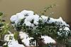 Snow_20120124_007_