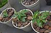 Plant_20120404_007_