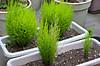 Plant_20120418_001_